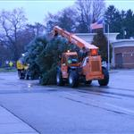 City vehicle carrying the evergreen tree